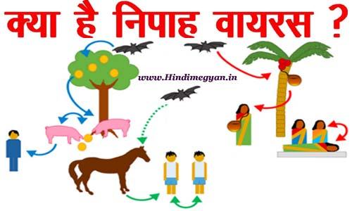 Nipah Virus: क्या हे निपाह वायरस इसके लक्ष्ण और बचाव
