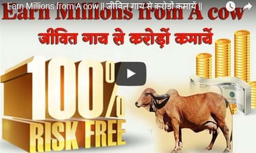 कैसे एक गाय से लाखों कमाएँ